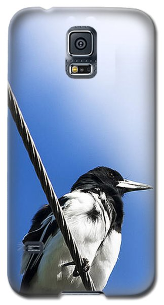 Magpie Up High Galaxy S5 Case by Jorgo Photography - Wall Art Gallery