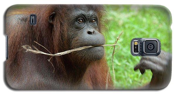 Malaysia, Borneo, Sabah, Kota Kinabalu Galaxy S5 Case by Cindy Miller Hopkins