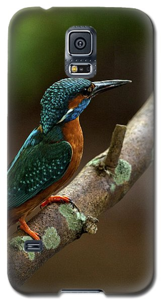 Male Kingfisher Galaxy S5 Case by Paul Scoullar