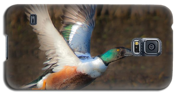 Male Northern Shoveler Galaxy S5 Case