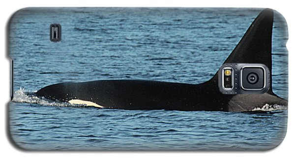 Galaxy S5 Case featuring the photograph Male Orca Killer Whale In Monterey Bay California 2013 by California Views Mr Pat Hathaway Archives