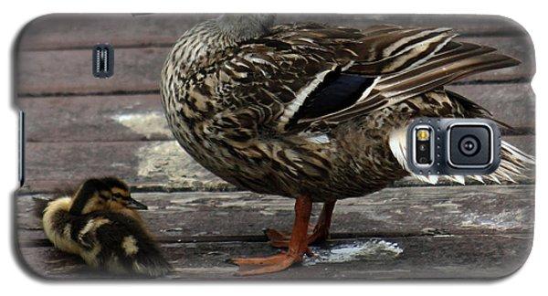 Mama Duck And Ducklings Galaxy S5 Case by Pamela Walton