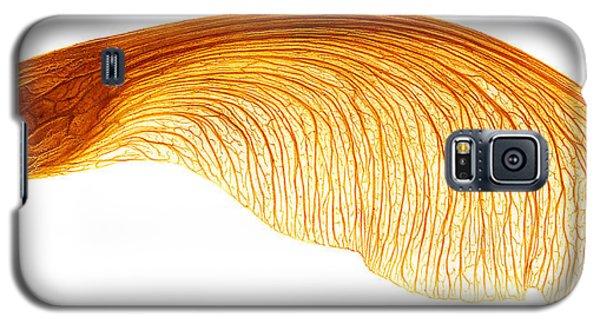 Maple Seed Pod Galaxy S5 Case