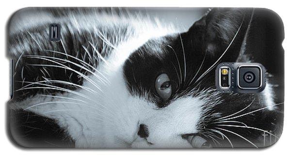 Max The Cat Galaxy S5 Case by David Warrington