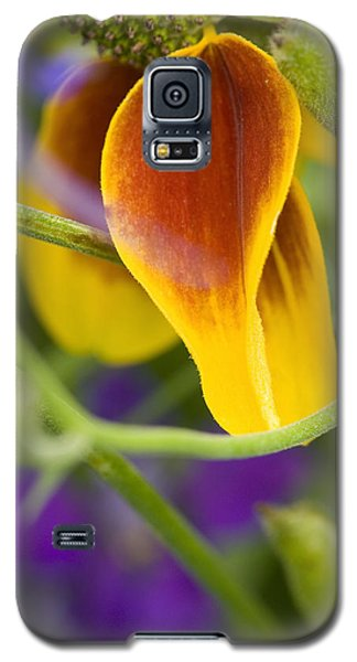 Mexican Hat Up Close Galaxy S5 Case