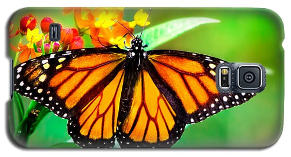 Monarch Butterfly Galaxy S5 Case by Mark Andrew Thomas