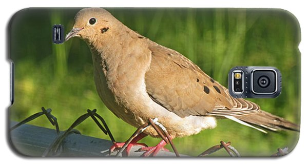Morning Dove I Galaxy S5 Case