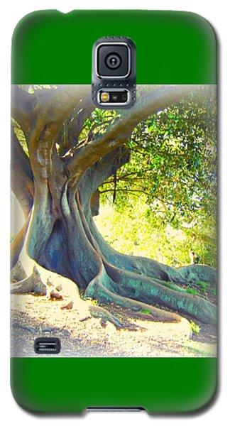 Morton Bay Fig Tree Galaxy S5 Case by Leanne Seymour