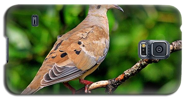 Mourning Dove Galaxy S5 Case