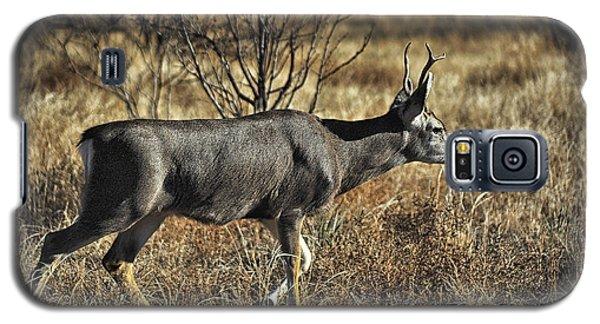 Mule Deer Buck Galaxy S5 Case by Karen Slagle