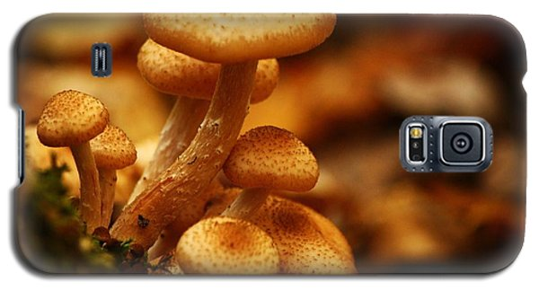 Mushrooms Of Fall Galaxy S5 Case