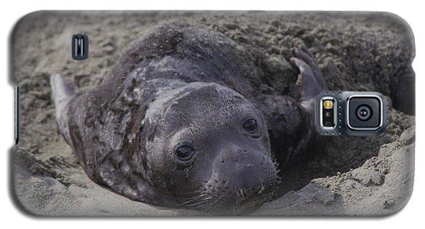 Newborn Northern Elephant Seal Pup  Galaxy S5 Case