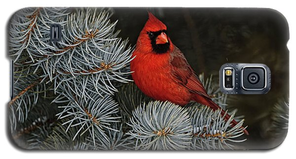 Northern Cardinal In Spruce Tree. Galaxy S5 Case