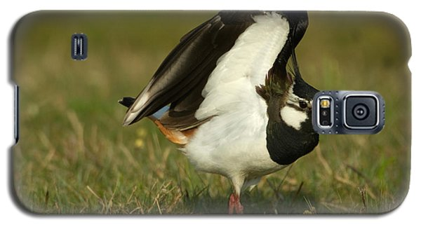 Northern Lapwing Galaxy S5 Case