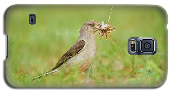 Mockingbird Galaxy S5 Case - Northern Mockingbird (mimus Polyglottos by Larry Ditto