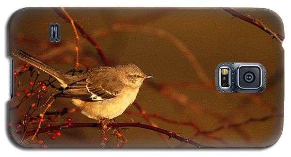 Northern Mockingbird Mimus Polyglottos Galaxy S5 Case by Paul J. Fusco