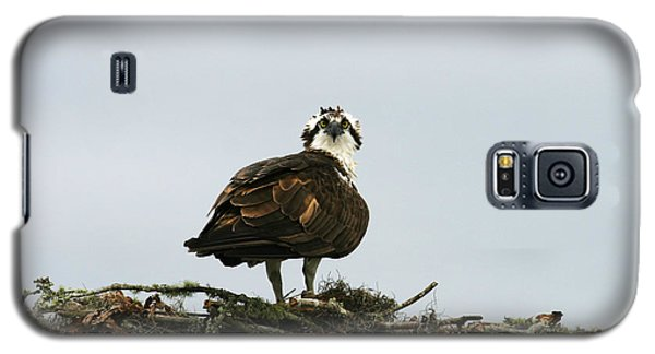 Osprey Nesting Galaxy S5 Case