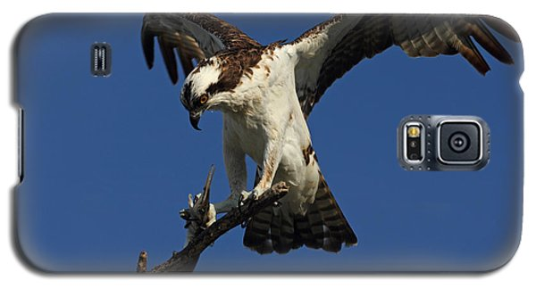 Galaxy S5 Case featuring the photograph Osprey With A Fish Photo by Meg Rousher