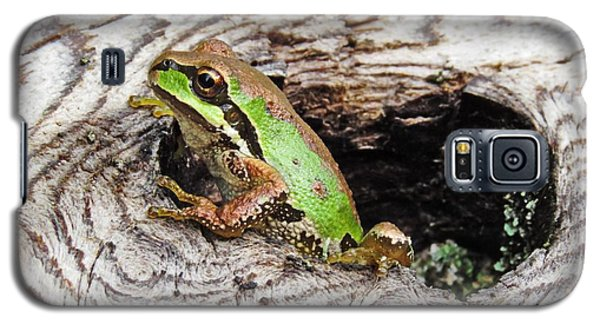Pacific Chorus Frog Galaxy S5 Case by I'ina Van Lawick