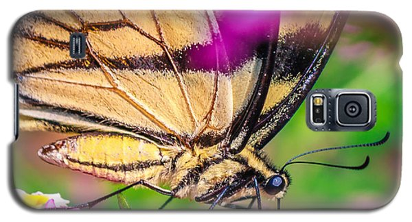 Galaxy S5 Case featuring the photograph Papilio Glaucus by Rob Sellers