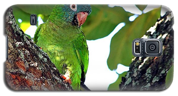 Parakeet In The Park Galaxy S5 Case