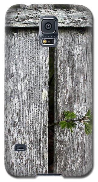 Peek-a-boo Galaxy S5 Case by Mary Bedy