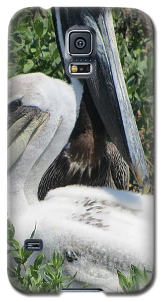 Pelicans Of Beacon Island 2 Galaxy S5 Case by Cathy Lindsey