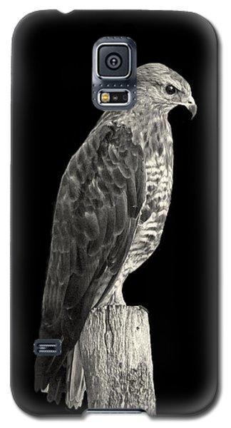 Peregrine Falcon Galaxy S5 Case by Lynn Bolt