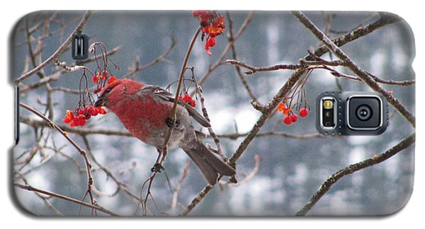 Pine Grosbeak And Mountain Ash Galaxy S5 Case by Leone Lund