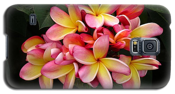 Pink And Yellow Plumeria Galaxy S5 Case by Karen Nicholson