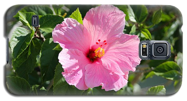 Single Pink Hibiscus Galaxy S5 Case