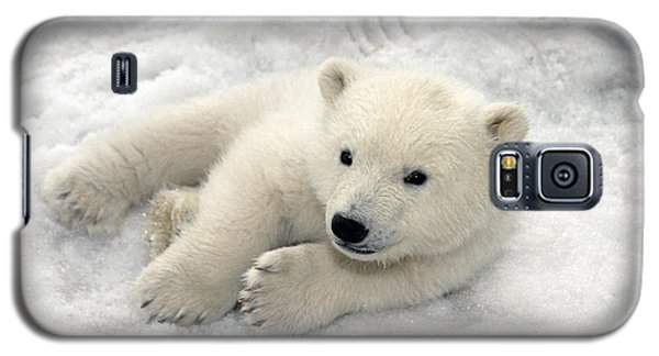 Polar Bear Cub Playing In Snow Alaska Galaxy S5 Case by Mark Newman