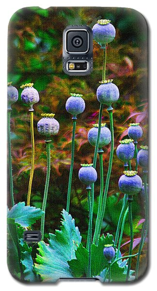 Poppy Seed Pods Galaxy S5 Case by Tom Janca