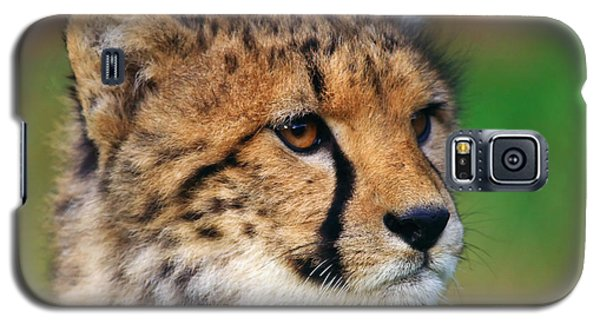 Galaxy S5 Case featuring the photograph Portrait Of A Cheetah Cub by Nick  Biemans