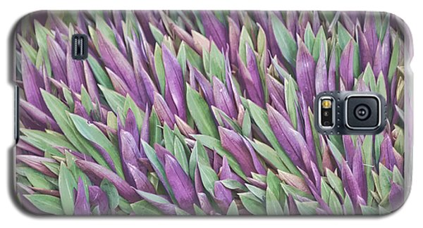 Galaxy S5 Case featuring the photograph Purple And Green by Holly Kempe