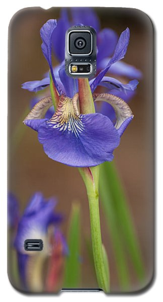 Purple Bearded Iris Galaxy S5 Case by Brenda Jacobs