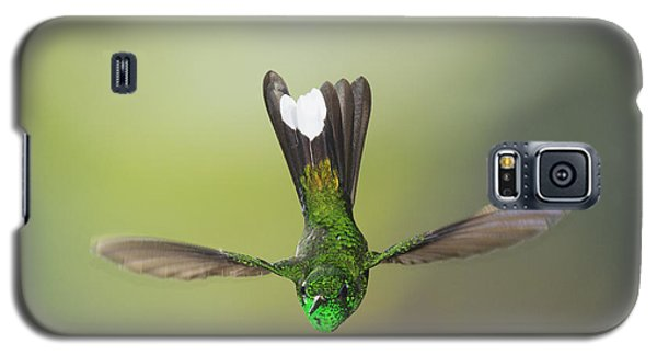 Galaxy S5 Case featuring the photograph Purple-bibbed White-tip Hummingbird by Dan Suzio