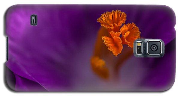 Purple Crocus Galaxy S5 Case by Bob Noble Photography