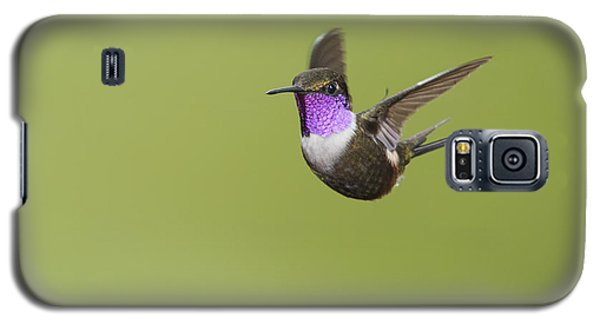 Galaxy S5 Case featuring the photograph Purple-throated Woodstar Hummingbird by Dan Suzio