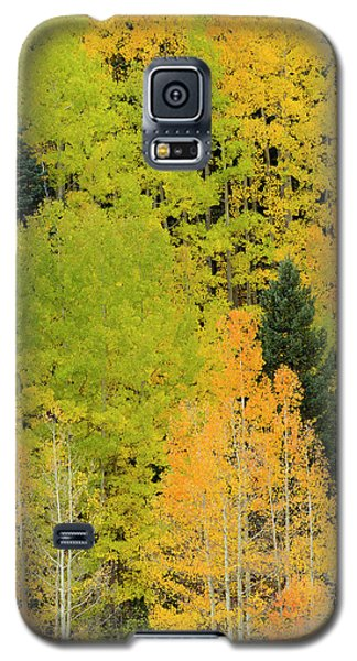 Sangre De Cristo Galaxy S5 Case - Quaking Aspens In A Fall Glow by Maresa Pryor