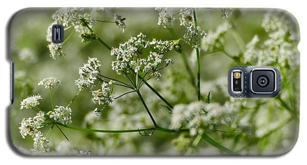 Queen Annes Lace Galaxy S5 Case