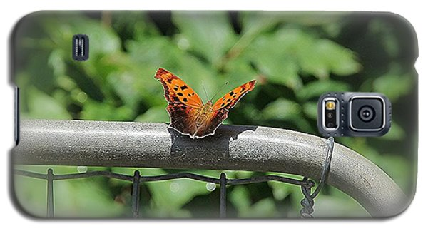 Galaxy S5 Case featuring the photograph Question Mark Butterfly by Yumi Johnson