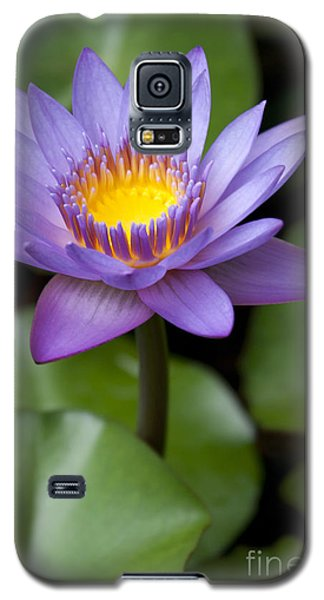 Radiance Galaxy S5 Case by Sharon Mau