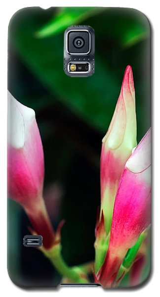 Reaching For The Sky Galaxy S5 Case
