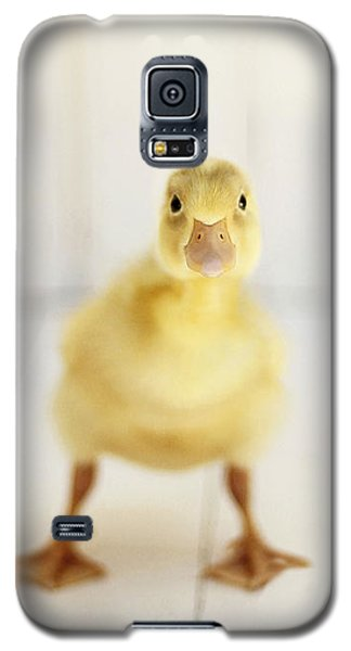 Ready To Rumble Galaxy S5 Case by Amy Tyler