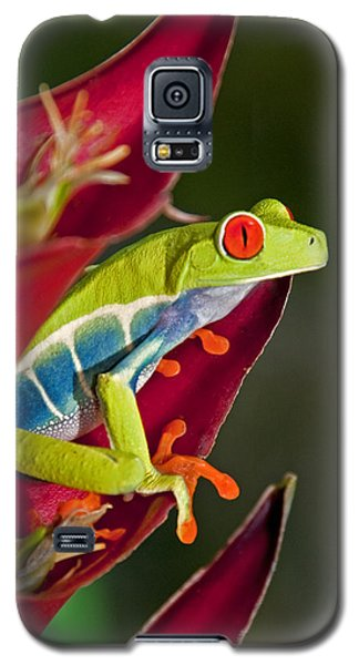 Galaxy S5 Case featuring the photograph Red Eyed Tree Frog 2 by Dennis Cox WorldViews