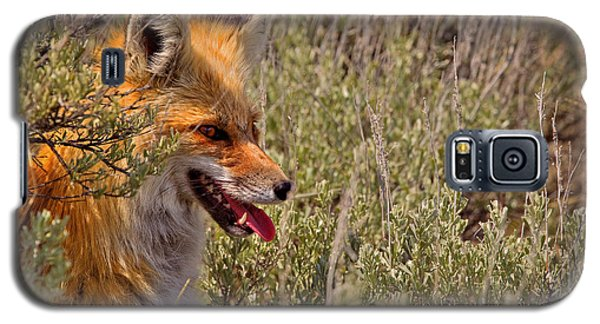 Galaxy S5 Case featuring the photograph Red Fox In Sage by Aaron Whittemore