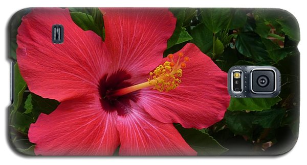 Galaxy S5 Case featuring the photograph Red Hibiscus by Jeanette Oberholtzer