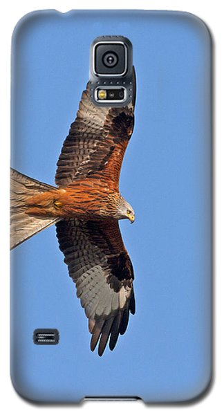 Red Kite Galaxy S5 Case by Paul Scoullar