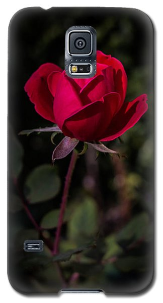 Red Rose Of Love Galaxy S5 Case